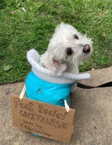 Protest dog, Oakland, Martin Luther King Day, 20 Jan 2020