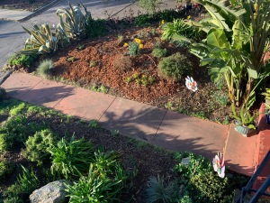 Willow Glen Front Garden, San Jose, California 9 Feb 2020