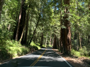 near Big Basin Redwoods State Park, 3 July 2020