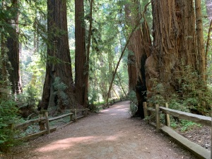 Henry Cowell Redwoods State Park, 5 July 2020